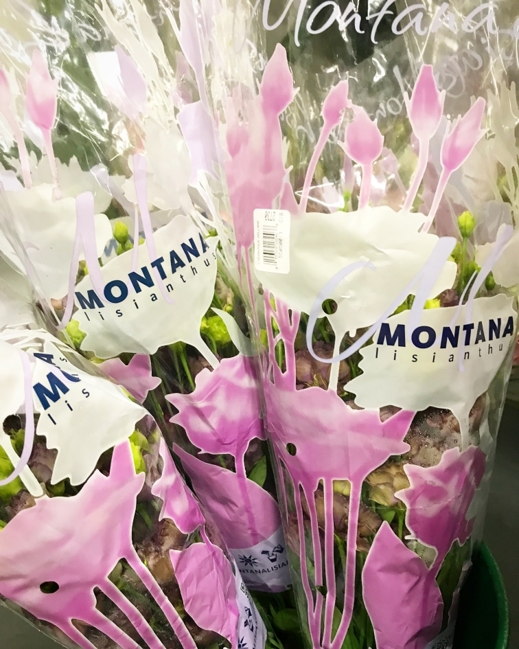 Floral Fundamentals Grower Montana Lisianthus In Canada